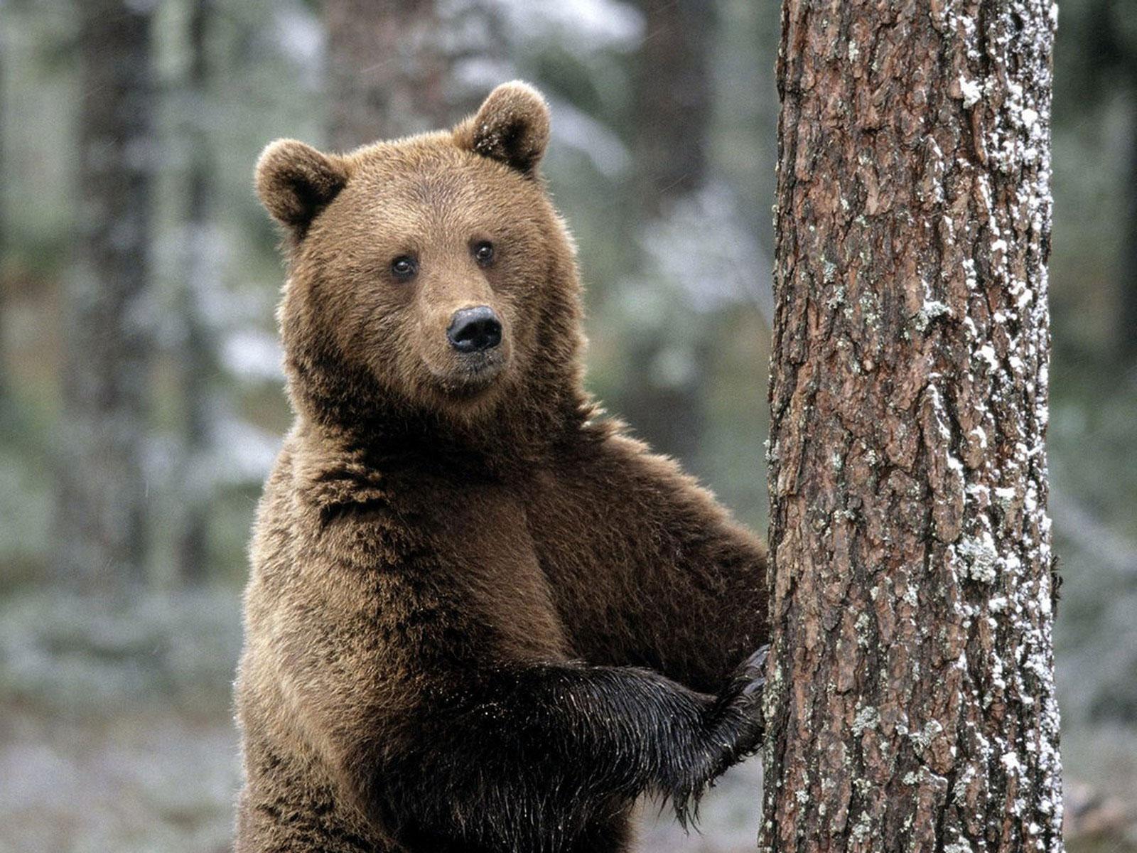 В харьковском зоопарке пробуждаются медведи (ВИДЕО)